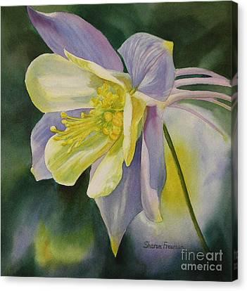 Blue Columbine Blossom Canvas Print by Sharon Freeman