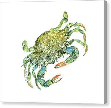 Blue Crab Canvas Print by Nancy Gorr