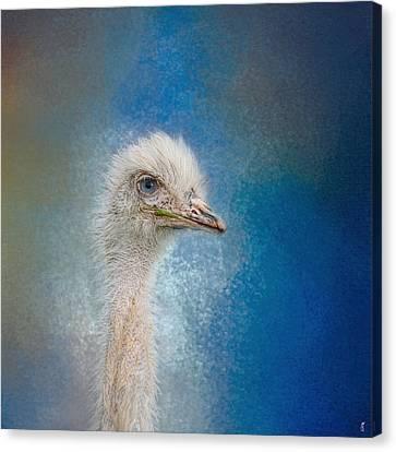 Blue Eyed Beauty - White Ostrich - Wildlife Canvas Print by Jai Johnson