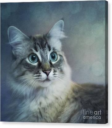Blue Eyed Queen Canvas Print by Priska Wettstein