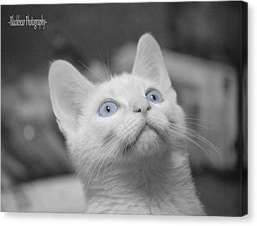Blue Eyes Canvas Print by Sherry Breece