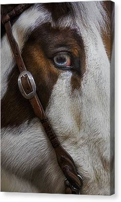 Blue Eyes Canvas Print by Susan Candelario