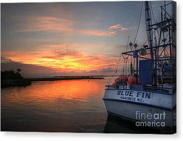 Blue Fin Morning Canvas Print by Terry Rowe