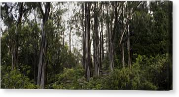 Blue Gum Eucalyptus Forest Canvas Print by Brad Scott