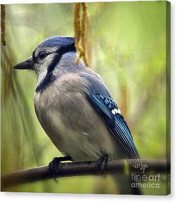 Blue Jay On A Misty Spring Day - Square Format Canvas Print by Lois Bryan