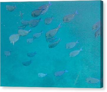 Blue Life Canvas Print by Michael Glenn
