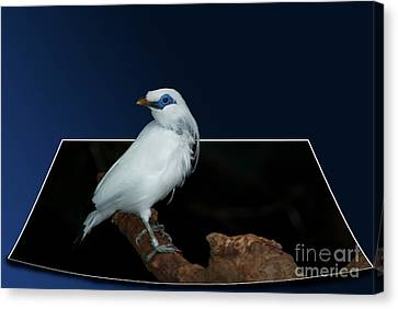 Blue Mask Bandit Bird Canvas Print by Thomas Woolworth