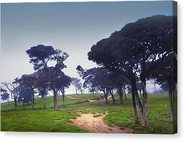 Blue Mist Silence. Sri Lanka Canvas Print by Jenny Rainbow