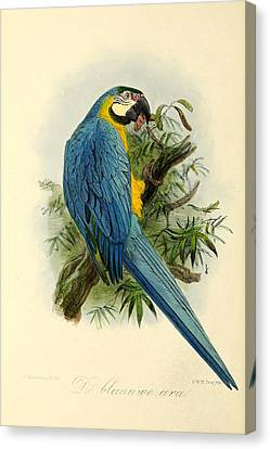 Blue Parrot Canvas Print by J G Keulemans