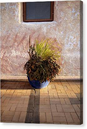 Blue Planter Morning Sun Canvas Print by Ann Powell