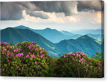 Blue Ridge Appalachian Mountain Peaks And Spring Rhododendron Flowers Canvas Print by Dave Allen