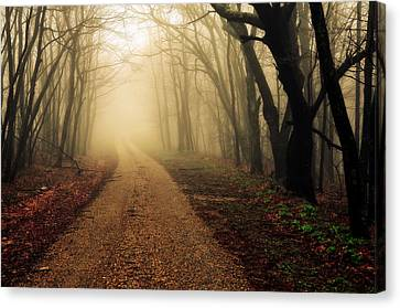 Blue Ridge Parkway In The Fog Canvas Print by Maria Jaeger