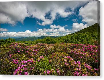 Blue Ridge Parkway Spring Flowers - Spring In The Mountains Canvas Print by Dave Allen