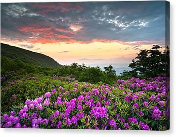 Blue Ridge Parkway Sunset - Craggy Gardens Rhododendron Bloom Canvas Print by Dave Allen