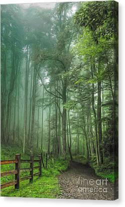 Blue Ridge - Trees In Fog Country Road II Canvas Print by Dan Carmichael