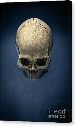 Blue Skull Canvas Print by Edward Fielding