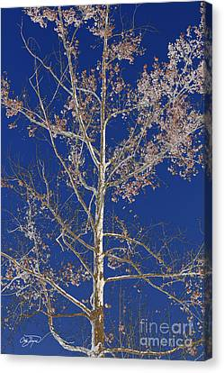 Blue Sky With A Twist Of Birch Canvas Print by Cris Hayes