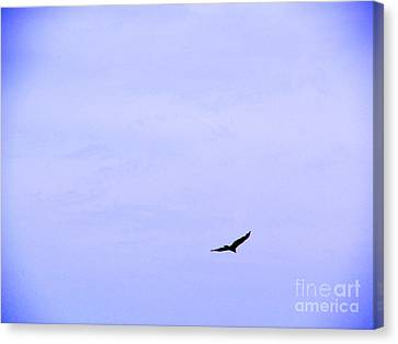 Blue Solo Flight Canvas Print by Tina M Wenger