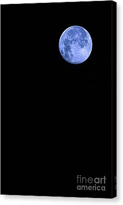 Blue Supermoon Canvas Print by Trish Mistric