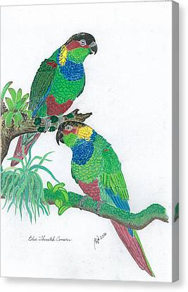 Blue Throated Conures Canvas Print by Anthony Purification