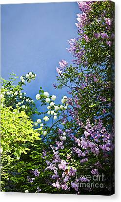 Blue Wall With Flowers Canvas Print by Elena Elisseeva