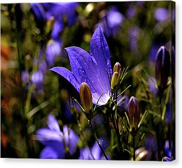 Bluebell Canvas Print by Rona Black