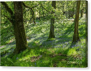 Bluebell Wood Canvas Print by John Collier