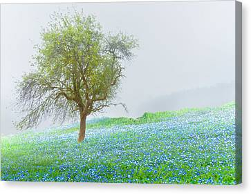 Bluebells Canvas Print by Debra and Dave Vanderlaan