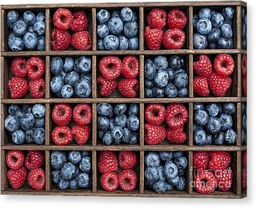 Blueberries And Raspberries  Canvas Print by Tim Gainey