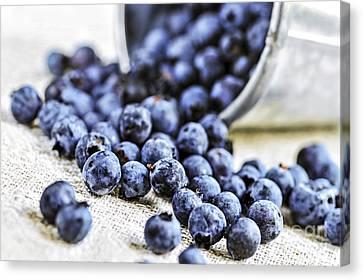 Blueberries Canvas Print by Elena Elisseeva