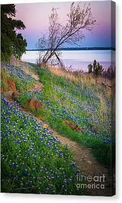Bluebonnet Path Canvas Print by Inge Johnsson