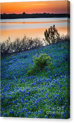 Grapevine Lake Bluebonnets Canvas Print by Inge Johnsson