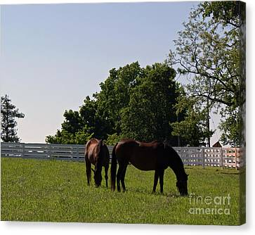 Bluegrass Summer Day Canvas Print by Roger Potts