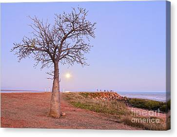 Boab Tree And Moonrise At Broome Western Australia Canvas Print by Colin and Linda McKie