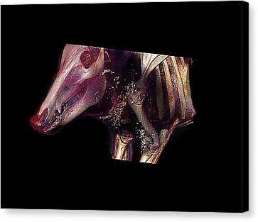 Boar Head Canvas Print by Anders Persson, Cmiv