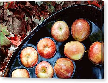 Bobbing For Apples Canvas Print by Kim Fearheiley