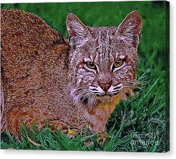 Bobcat Sedona Wilderness Canvas Print by Bob and Nadine Johnston