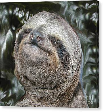 Boca Sloth Canvas Print by Bruce Stanfield