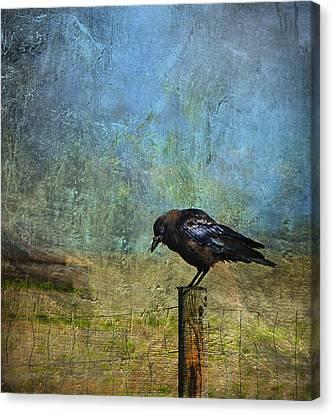 Bold Amiable Ebon Outlaw Canvas Print by Theresa Tahara