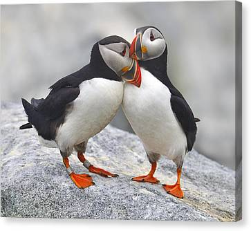 Bonded And Banded Canvas Print by Tony Beck