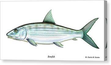 Bonefish Canvas Print by Charles Harden