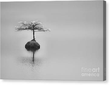 Bonsai At Fairy Lake Canvas Print by Carrie Cole
