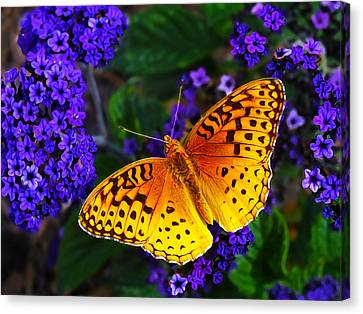Boothbay Butterfly Canvas Print by Bill Caldwell -        ABeautifulSky Photography