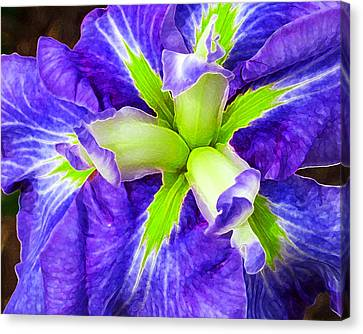 Boothbay Violet With Chartreuse Canvas Print by Bill Caldwell -        ABeautifulSky Photography