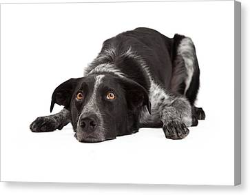 Border Collie Laying Head Down Canvas Print by Susan  Schmitz