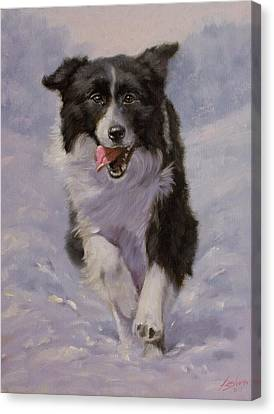 Border Collie Portrait II Canvas Print by John Silver