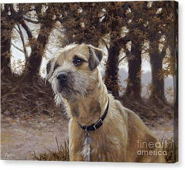 Border Terrier In The Woods Canvas Print by John Silver