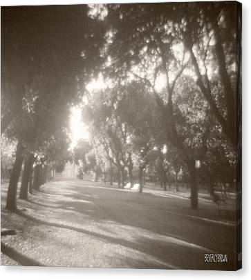 Borghese Gardens Path Canvas Print by Beverly Brown