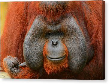 Bornean Orangutan Canvas Print by Lourry Legarde
