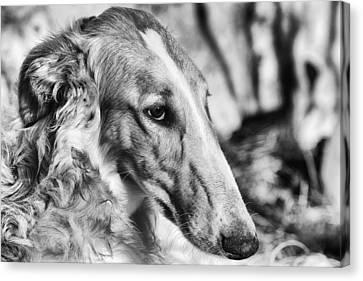 Borzoi Dog Portrait Canvas Print by Christian Lagereek